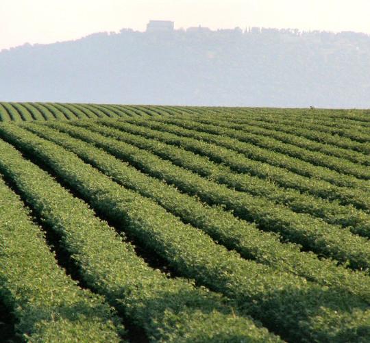 La Bcc sostiene il settore agricolo dopo le gelate tardive che hanno colpito il territorio