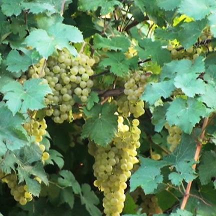 Così il coronavirus ha capovolto il mercato del vino