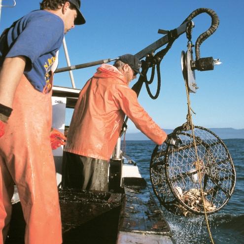 Pesca: Alleanza Cooperative, no alle telecamere a bordo dei pescherecci